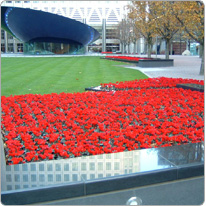 Mini Metis® cyclamen  Red - London