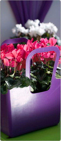 2 Tianis® cyclamens  neon fuchsia - Purple Koziol bag