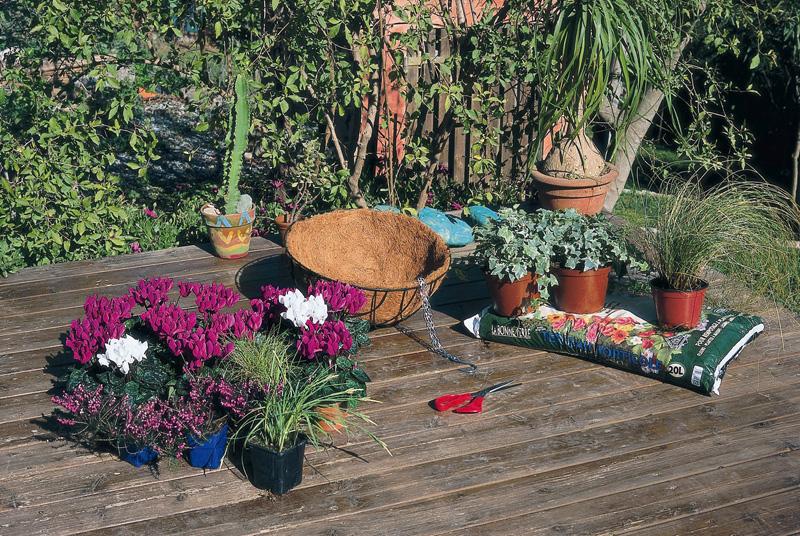 Jardines verticales monterrey jard n vertical colgante for Jardin vertical colgante
